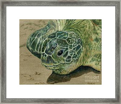 Turtle Beach Framed Print