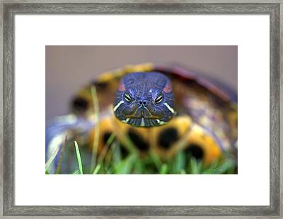 Turtle Beauty Framed Print