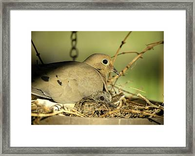 Turtle Doves Framed Print by Shirley Tinkham