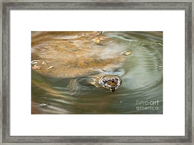 Turtle Framed Print by Johan Larson