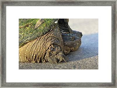 Framed Print featuring the photograph Turtle by Nick Mares