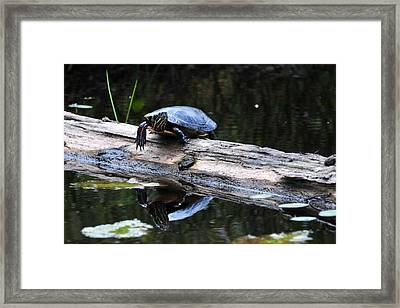 Turtle Reflected Framed Print