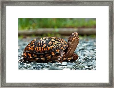 Turtle Shine Framed Print