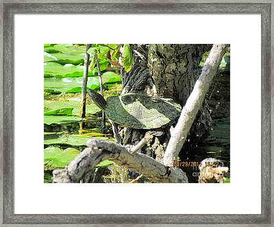 Turtle Sun Framed Print by Thomas Sterett