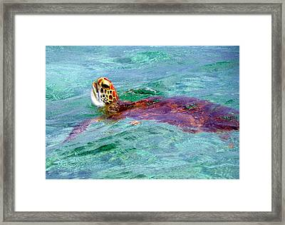 Turtle Time  Framed Print by Karen Wiles