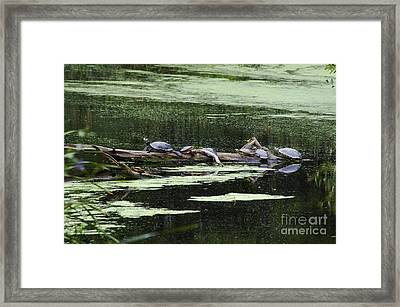 Turtles On Log Scarboro Pond#1  Framed Print by Gordon Gaul