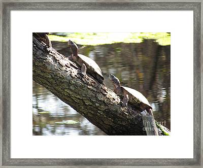 Turtles On The Move Framed Print by Bonnie Muir
