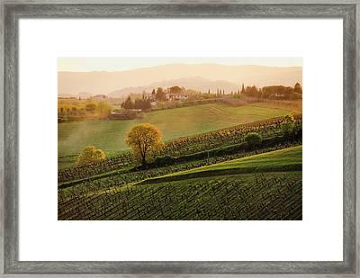 Tuscan Vinyards Framed Print by John and Tina Reid