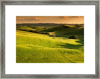 Tuscany Cornfield With Lone Tree At Sunset Framed Print
