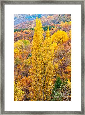 Framed Print featuring the photograph Tuscany Landscape  by Luciano Mortula