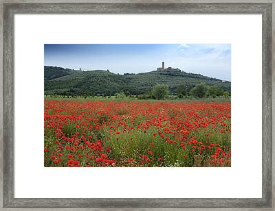 Tuscany Poppies 1 Framed Print by Al Hurley