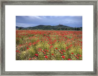 Tuscany Poppies 2 Framed Print by Al Hurley