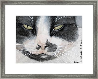 Tuxedo Cat Framed Print by Svetlana Ledneva-Schukina