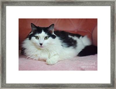 Tuxy In Repose Framed Print by Byron Varvarigos