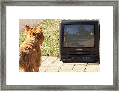 Tv Watching Dog Framed Print by Susan Stone