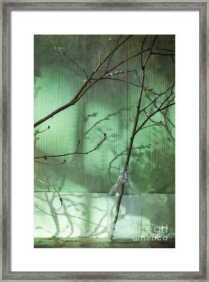 Twigs Shadows And An Empty Beer Jug Framed Print by Priska Wettstein