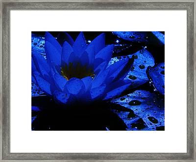 Twilight Framed Print by Barbara St Jean