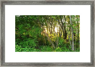 Twilight In The Woods Framed Print
