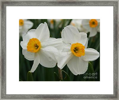 Twin Flowers Framed Print by Tina McKay-Brown