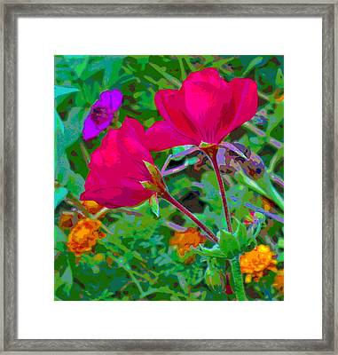 Twin Geranium Blossoms With Colorful Background Framed Print by Padre Art