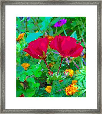 Twin Geraniums With Marigold Flowers Framed Print by Padre Art
