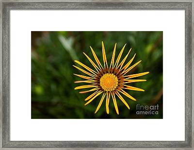 Twinkle Twinkle Framed Print by Syed Aqueel