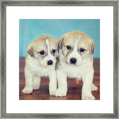 Twins Puppies Framed Print by Christina Esselman