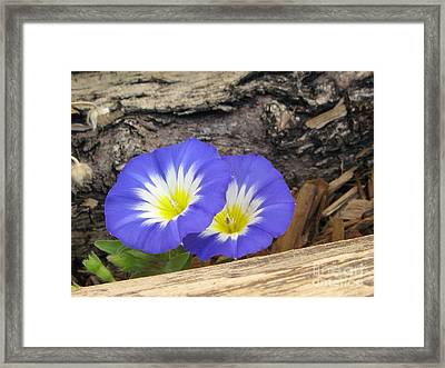 Twins Framed Print by Tina Marie