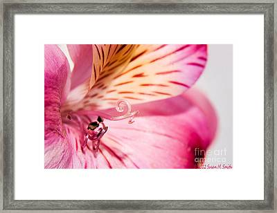 Twirl And Curl Framed Print