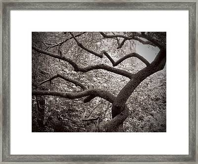 Twist  Framed Print by Felix Concepcion