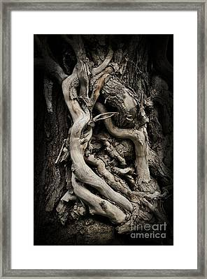 Twisted Dreams Framed Print by Mary Machare