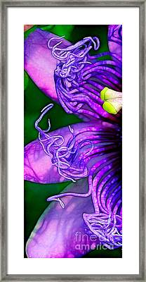 Twisted Shadows Framed Print by Judi Bagwell