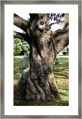 Twisted Tree Framed Print by Janice Paige Chow