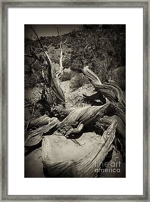 Twisted Wood Framed Print
