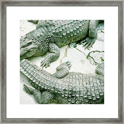 Two Alligators Framed Print by Yasushi Okano