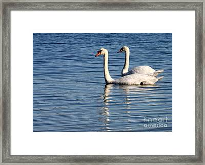 Two Beautiful Swans Framed Print by Sabrina L Ryan