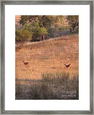 Two Bucks On The Run Framed Print by Yumi Johnson