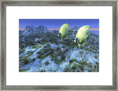 Two Butterflyfish Swim Together Over An Framed Print