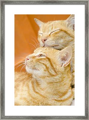 Two Cats Sleep Framed Print
