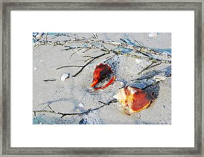 Two Conch Shells With Branch Framed Print by Olivia Novak