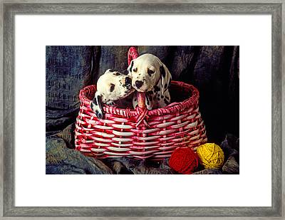 Two Dalmatian Puppies Framed Print