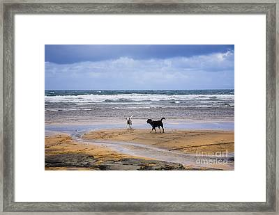 Two Dogs Playing On The Beach Framed Print by Kathleen Smith