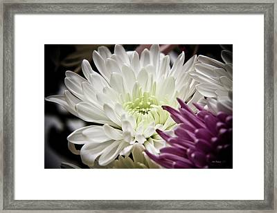 Two Flowers Framed Print by John Pagliuca