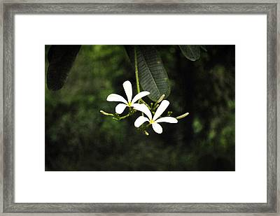 Two Flowers Framed Print by Sumit Mehndiratta