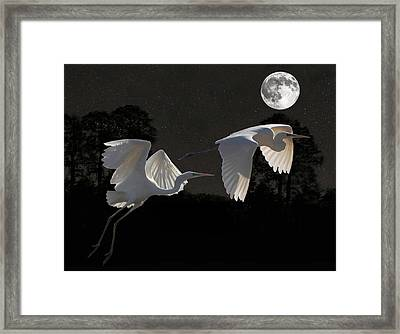 Two Great Egrets  Framed Print by Eric Kempson