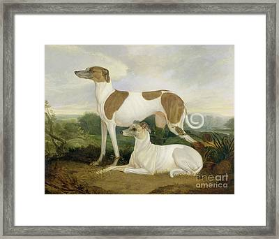 Two Greyhounds In A Landscape Framed Print by Charles Hancock
