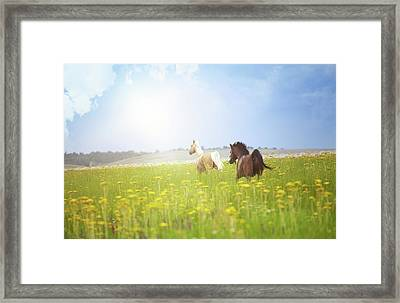 Two Horses Framed Print by Arman Zhenikeyev - professional photographer from Kazakhstan