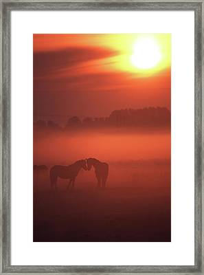 Two Horses At Sunset Framed Print by John Foxx