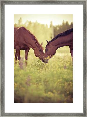 Two Horses In Field Framed Print by Stefan Sager