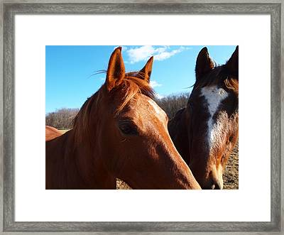 Two Horses In Love Framed Print by Robert Margetts